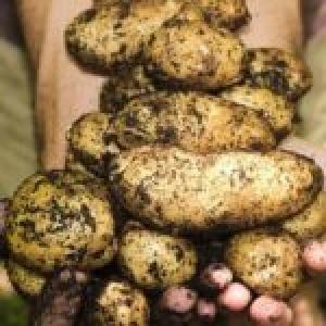 Incontro sulla sovranità alimentare in Emilia Romagna